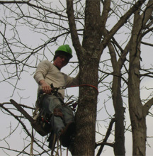 Tree Expert, Tree Services in Sussex, NJ